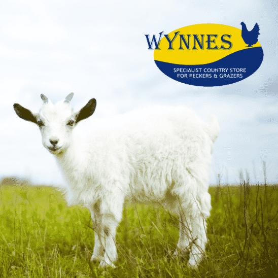 Wynnes of Dinmore