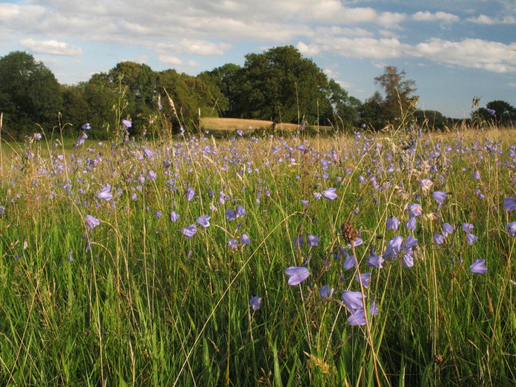 Herefordshire Wildlife Trust