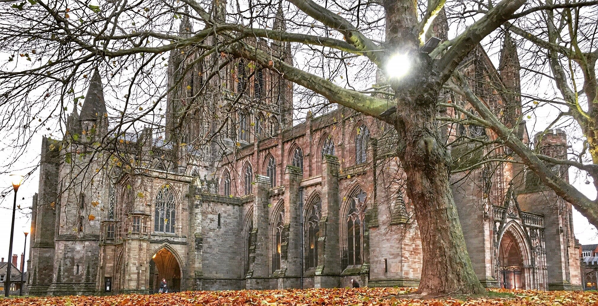 CATHEDRAL & LEAVES