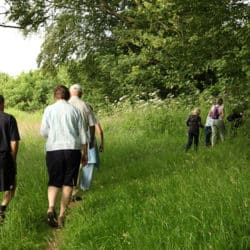 Bromyard Walkers and trees