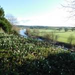 The river and snowdrops at The Weir