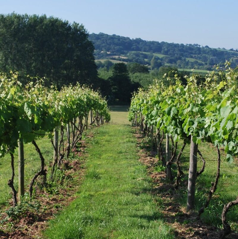 A picture of Frome Valley Vineyards