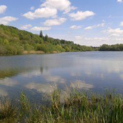 Bodenham Lake, Herefordshire