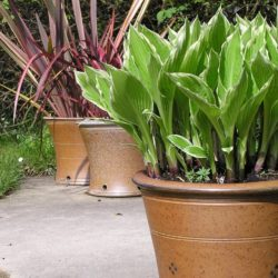 Salt Glaze Garden Pots by Toff Milway 2