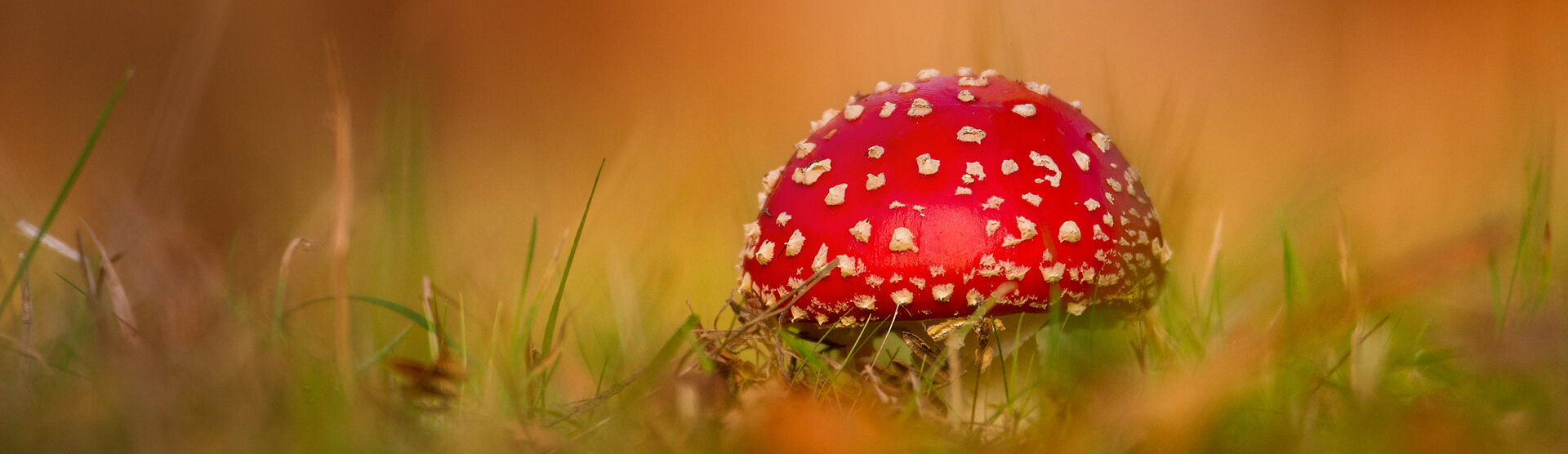 UK Fungus Day at Queenswood