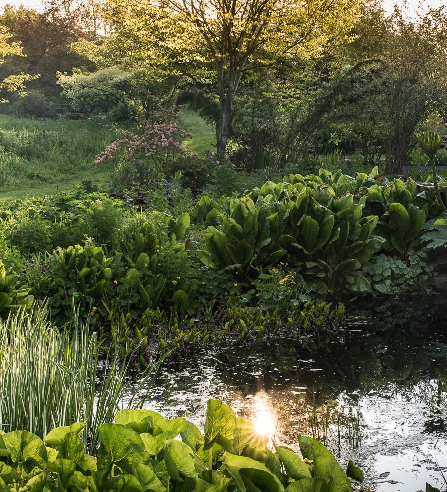 garden photography at stockton bury gardens eat sleep. Black Bedroom Furniture Sets. Home Design Ideas
