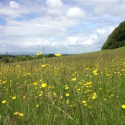 Bromyard Downs, Herefordshire