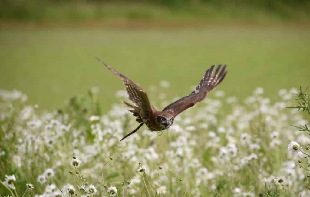 Wye Valley Falconry