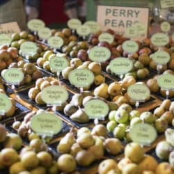 perry pears herefordshire