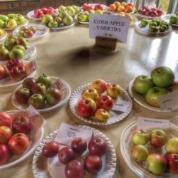 herefordshire cider apples