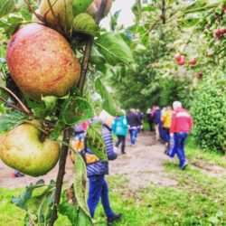 cider orchard tour