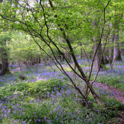 Lea and Pagets Wood