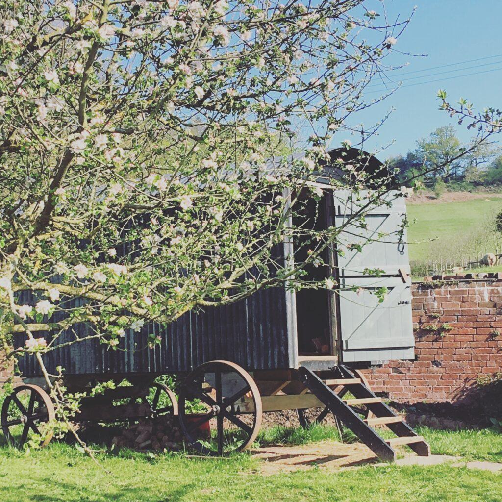 Home Farm Dulas Glamping