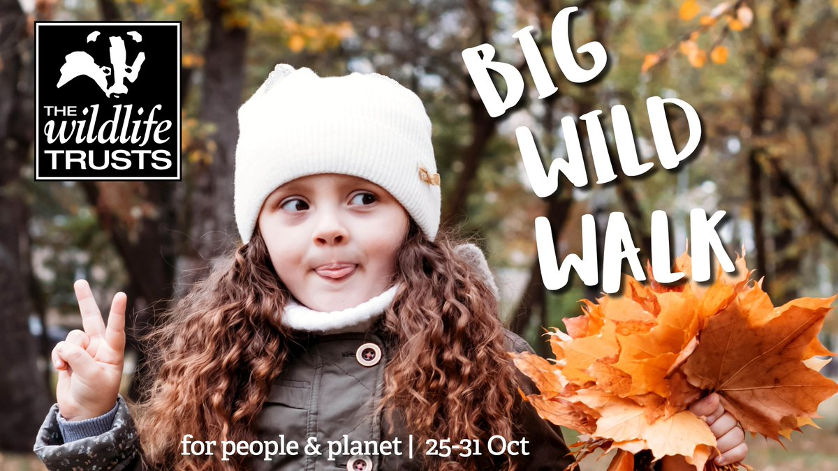 Big Wild Walk
