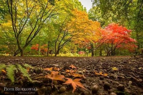 Autumn is Queenswood