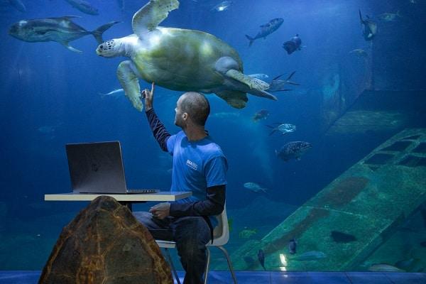 National Marine Aquarium Home Learning
