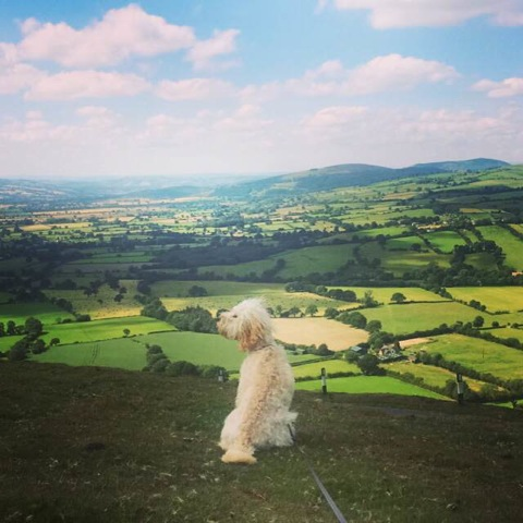 Walk your dog in Mortimer Country by E Jenkins