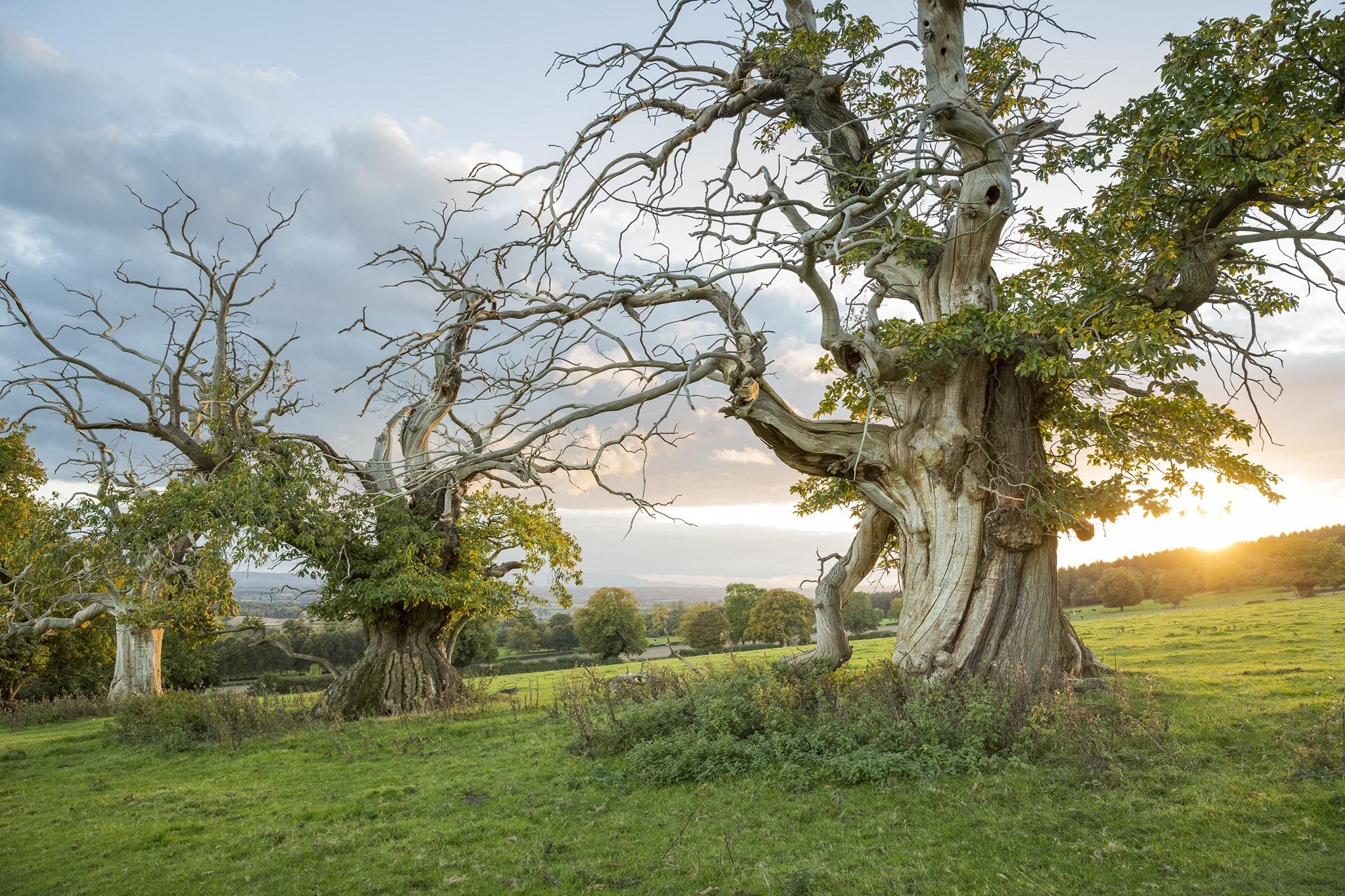 Croft Castle Ancient Tree Walks