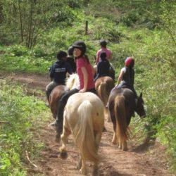 Bromyard - horses from back