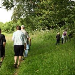 Bromyard Walkers and trees