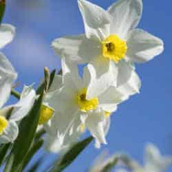 Discover something new this March with the National Trust in Herefordshire